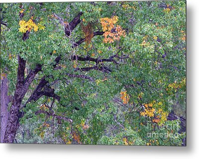 Changing Of The Seasons Metal Print by Mary Deal