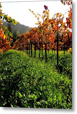 Changing Vines Metal Print