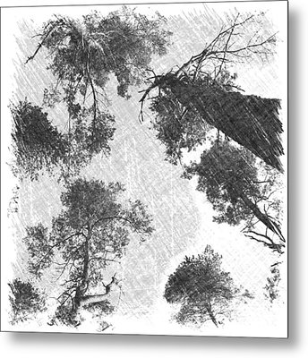 Charcoal Trees Metal Print