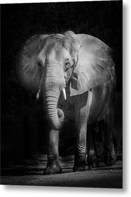 Charging Elephant Metal Print