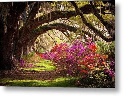 Charleston Sc Magnolia Plantation Gardens - Memory Lane Metal Print
