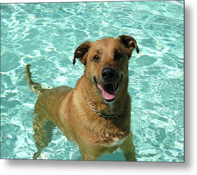 Metal Print featuring the photograph Charlie In Pool by Rebecca Wood