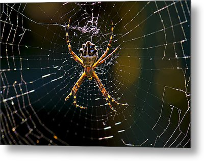 Metal Print featuring the photograph Charlotte's Web by Thanh Thuy Nguyen