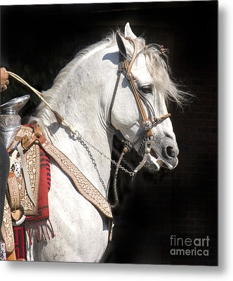 Charro Stallion Metal Print by Jim And Emily Bush