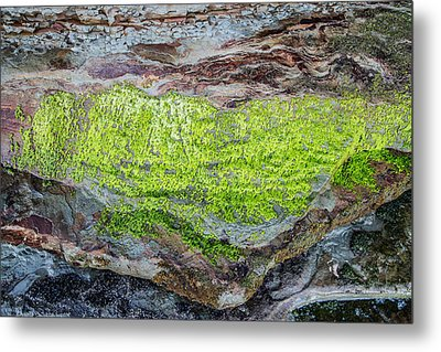 Chartreuse Abstraction Metal Print