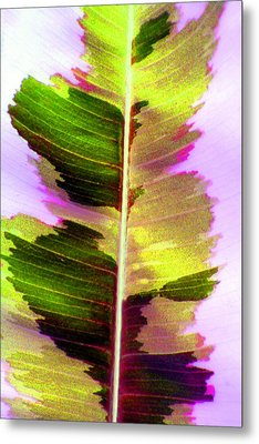 Chartreuse Metal Print by Carolyn Stagger Cokley