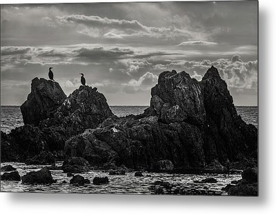 Chatting On Rocks Metal Print
