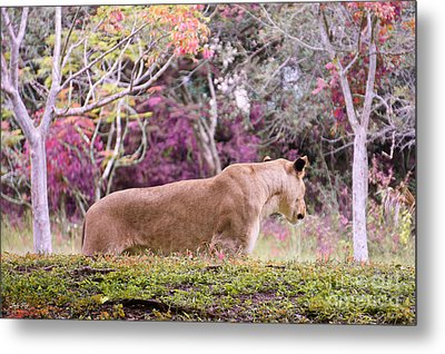 Checking Things Out Edition 2 Metal Print by Judy Kay