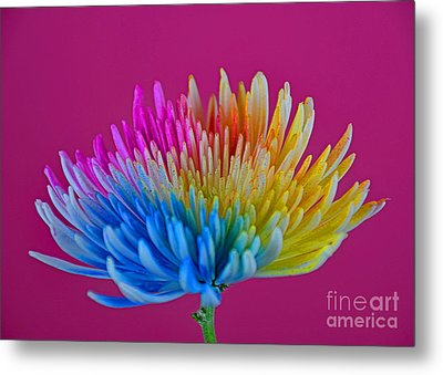 Cheerful Metal Print by Ray Shrewsberry