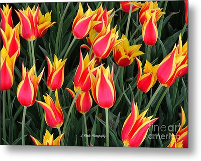Cheerful Spring Tulips Metal Print