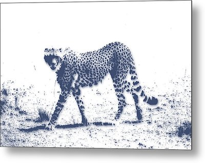 Cheetah 2 Metal Print by Joe Hamilton