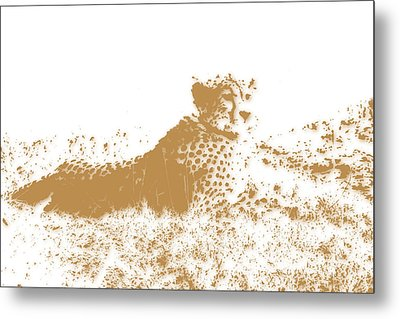 Cheetah 4 Metal Print by Joe Hamilton