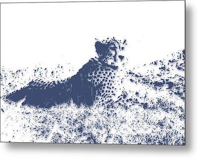 Cheetah Metal Print by Joe Hamilton