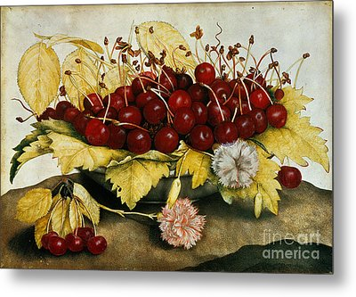 Cherries And Carnations Metal Print by Giovanna Garzoni