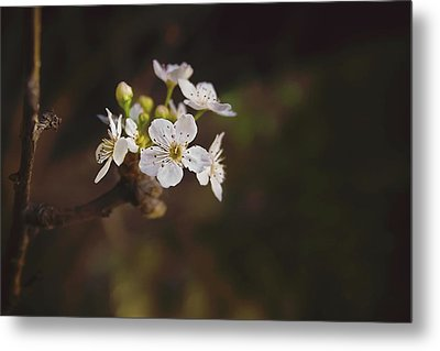 Metal Print featuring the photograph Cherry Blossom by April Reppucci