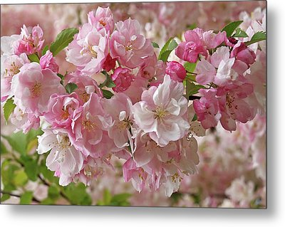 Metal Print featuring the photograph Cherry Blossom Closeup by Gill Billington