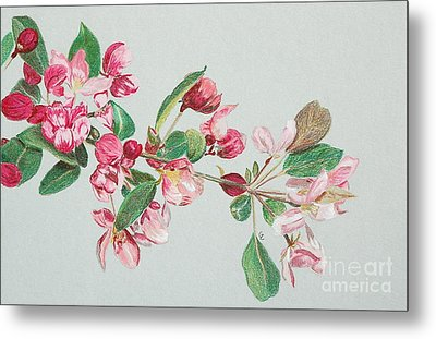 Cherry Blossom Metal Print by Glenda Zuckerman
