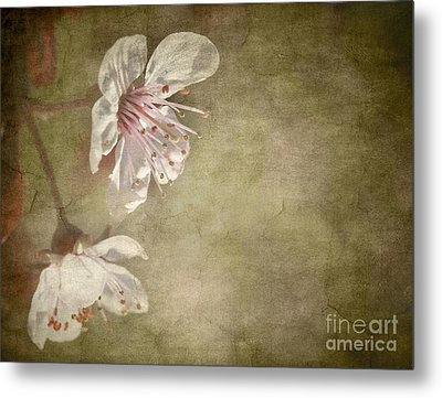 Cherry Blossom Metal Print by Meirion Matthias