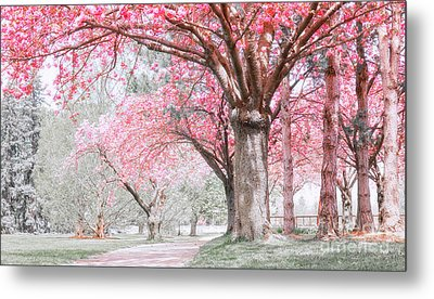 Metal Print featuring the photograph Cherry Blossom Path by Charline Xia