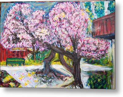 Cherry Blossom Time Metal Print by Carolyn Donnell