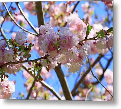 Cherry Blossom Trees Of Branch Brook Park  12 - Photopainting Metal Print by Allen Beatty