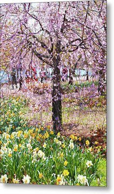 Cherry Blossom Trees Of Branch Brook Park 7 Metal Print by Allen Beatty