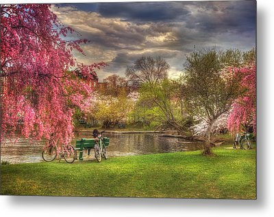 Cherry Blossom Trees On The Charles River Basin In Boston Metal Print by Joann Vitali