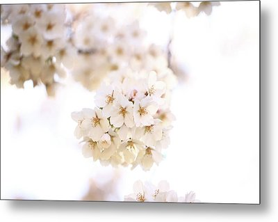 Metal Print featuring the photograph Cherry Blossoms - A by Anthony Rego