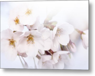 Metal Print featuring the photograph Cherry Blossoms - C by Anthony Rego