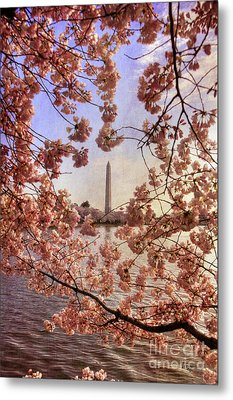 Cherry Blossoms And The Washington Monument Metal Print by Lois Bryan