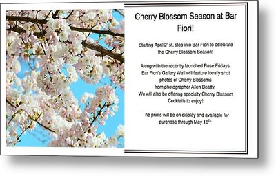 Cherry Blossoms At Al Fiori Metal Print by Allen Beatty