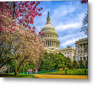 Cherry Blossoms At The Capitol Metal Print