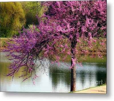 Cherry Blossoms By The Pond Metal Print by Sue Melvin