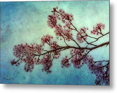Cherry Blossoms Metal Print by Christine Hauber