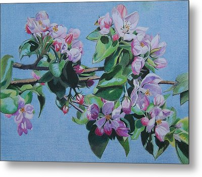 Metal Print featuring the mixed media Cherry Blossoms by Constance Drescher