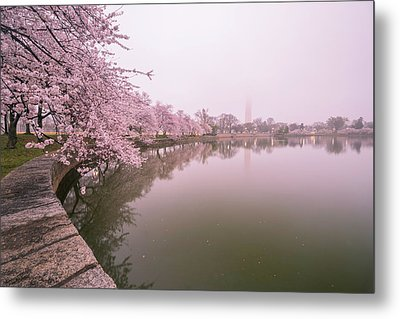 Cherry Blossoms In Fog Metal Print by Michael Donahue