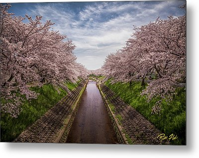 Metal Print featuring the photograph Cherry Blossoms In Nara by Rikk Flohr