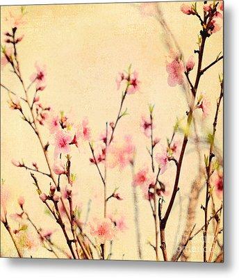 Cherry Blossoms Metal Print by Kim Fearheiley
