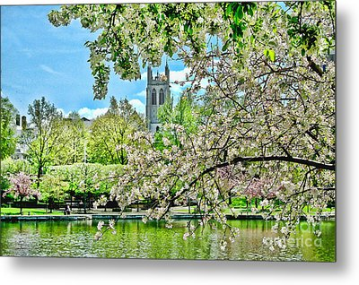Cherry Blossoms Metal Print by Mark Madere