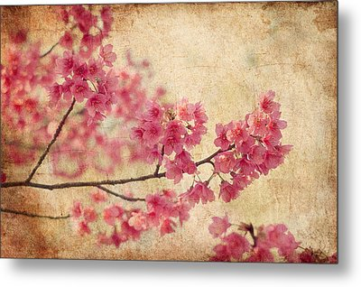 Cherry Blossoms Metal Print by Rich Leighton
