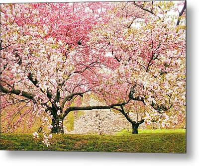 Cherry Delight Metal Print by Jessica Jenney