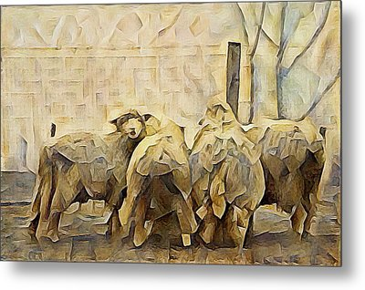 Chester County Sheep Metal Print