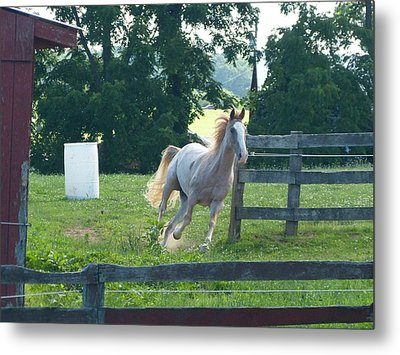 Chester On The Run Metal Print by Donald C Morgan
