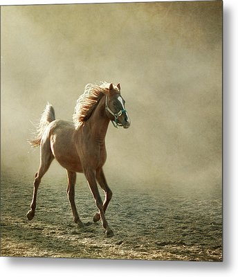 Chestnut Arabian Horse Metal Print by Christiana Stawski
