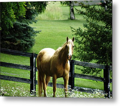 Chestnut Metal Print by Scott Hovind