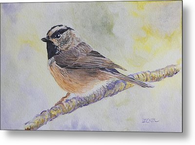 Metal Print featuring the painting Chickadee 2 by Robert Decker