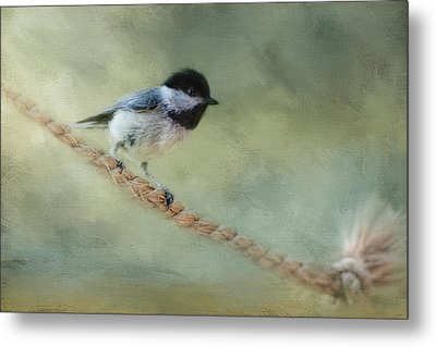 Chickadee At The Shore Metal Print