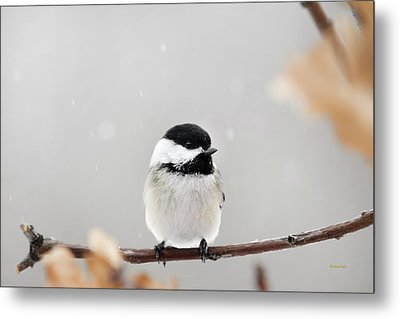 Metal Print featuring the photograph Chickadee Bird In Snow by Christina Rollo