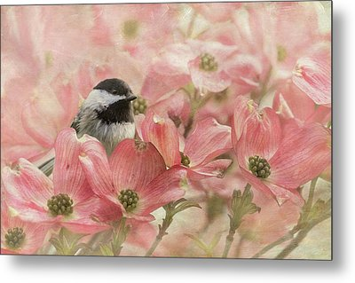 Metal Print featuring the photograph Chickadee In The Dogwood by Angie Vogel