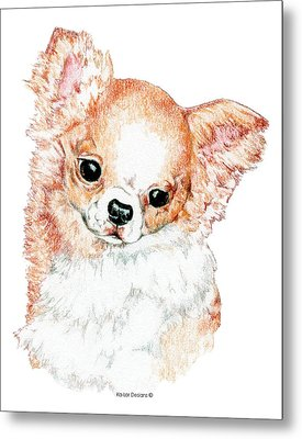 Chihuahua, Long Coat Metal Print